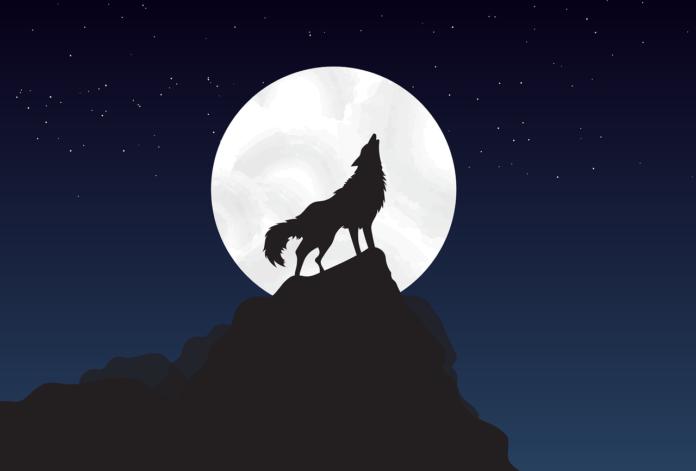 Motyw wilka w literaturze